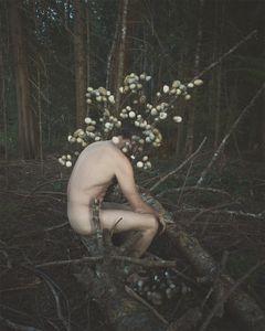 A Fragile Nature