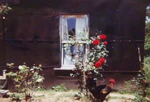 Black House, Red Roses and Rooster