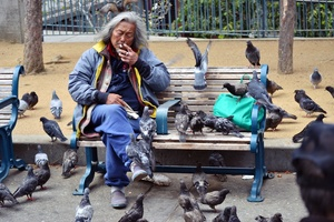 The Pigeon Man, San Francisco