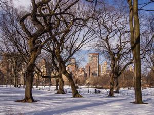 Winter Tree Skyline
