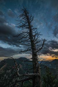 Elements tree