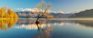The Tree over the Lake Wanaka at dawn