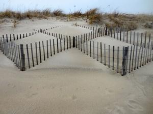 Beach Fencing