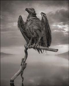 Petrified Fish Eagle © Nick Brandt. Courtesy of Edwynn Houk Gallery, New York