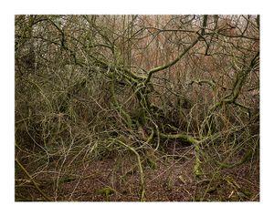 Totley Brook #3