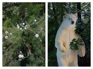 Dandelions & Polar Bear