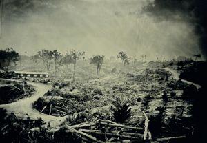 Lost Habitat, Borneo