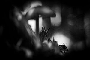 Deep dark forest 3
