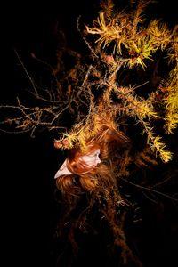 Coughing Spikes, 2012 © Anni Kinnunen
