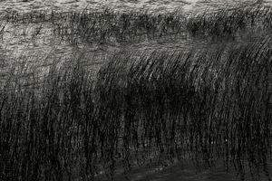 Upper Hadlock Pond 32, © Alan Henriksen