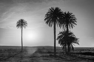 Las palmeras @ Lajares