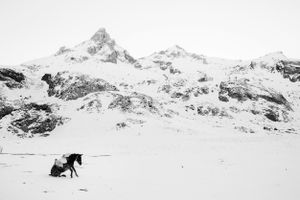 """""""A donkey is getting up after rolling in the snow in the mountains in Albania"""". From the Series """"Whiteout"""""""