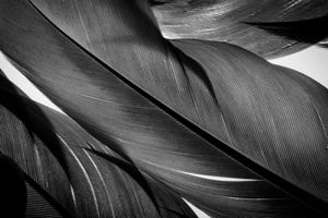 6. Feather Series