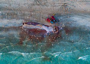 Sardine Season (3)