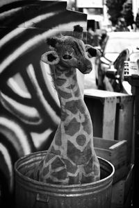 Giraffe in a Trash Can, San Francisco