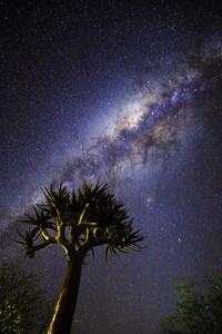 Stars over a Kokerboom