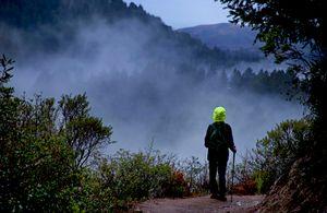 Hiking With Jeanne 1, Purisima Creek Redwood