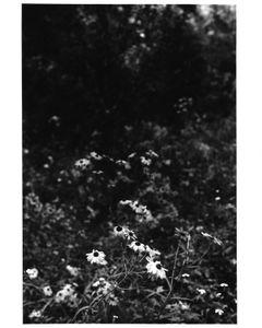 Flower Depth