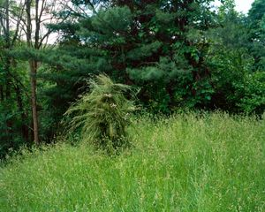 Ghillie Suit (Tall Grass), 2013 © Jeremy Chandler