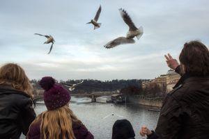 Feed the Birds. Praha, Česká republika. 2015.
