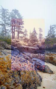 Cox Bay Shoreline Revelation