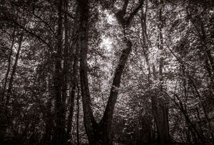 Forest vibration and faces, old style image.