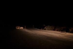Night patrolling along the Blue Line.