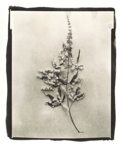 Botanical Specimen with Salt (Unidentified No. 3) © Claire A. Warden