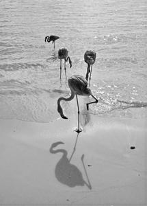 flamenco en la arena