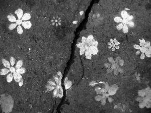 TRACES-PARIS - Les fleurs