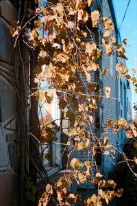 Port Royal West Street, Saint-Laurent, 2010