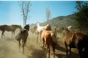 Tales of a Gaucho