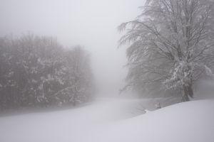 la morbidezza della neve