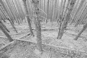 The Dying Forest #04