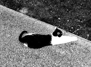 Stray Cat 14