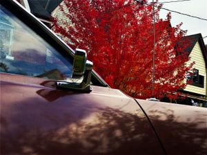 red tree, brown car