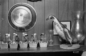 Still Life With Penguin