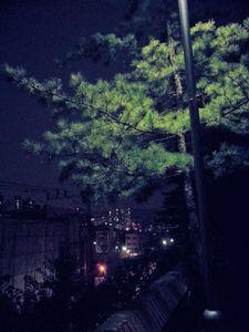 Walk through the night1