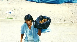Camino a Trinidad. Bolivia