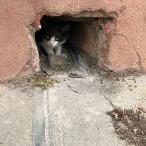 Hiding Cat, Trindad