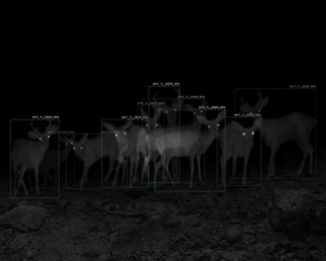10 Captures of White-Tailed Deer with A.I. Recognition, 1-Week Interval, Patagonia Mountains, AZ
