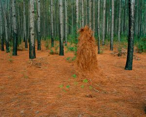 Ghillie Suit (Pines Straw), 2011© Jeremy Chandler