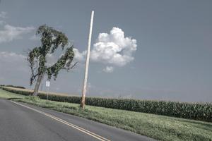 Tree Pole Corn and a Lyrical Cloud