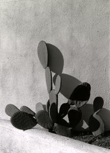 Nopales, Tucson, Arizona, 2014