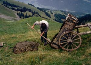 Mamil Castella répands le fumier à l'aide d'un char tiré par son cheval, comme d'antan