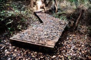 Crooked Path   © Seán Duggan