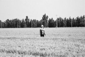 Keep watching in the wheat field
