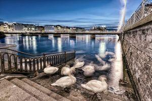 Cygnes fantomatiques au bord du Rhône, Genève, Suisse
