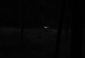 Michał Korta, Untitled [Albino Deer] (#0001539) from the series The Shadow Line,