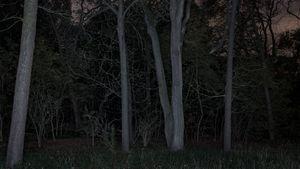 Foresta - reverse 04-2